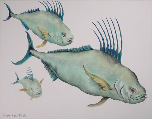 Water colors of animals for Rooster fish pictures